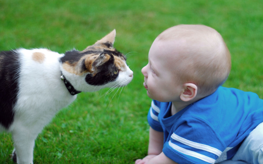 Your pet and your new baby