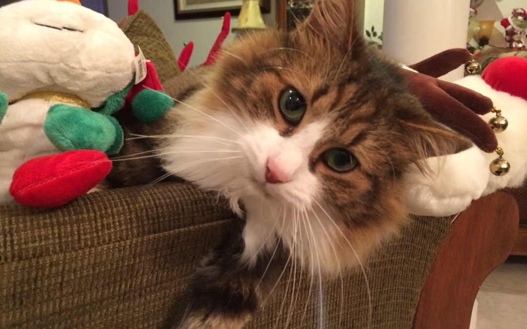 The Holidays and Your Pet